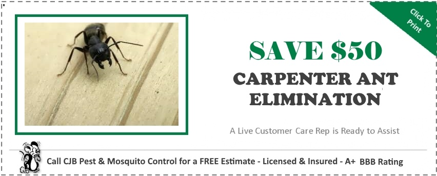 "alt=""carpenter ant elimination coupon for $20 off from cjb pest and mosquito control"""