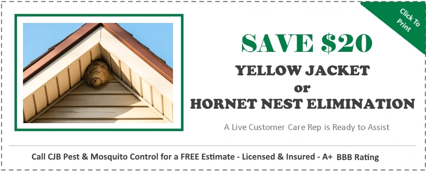 "alt="" hornet Nest removal Coupon, save $20"""