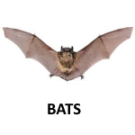 "alt=""bat on white background"""