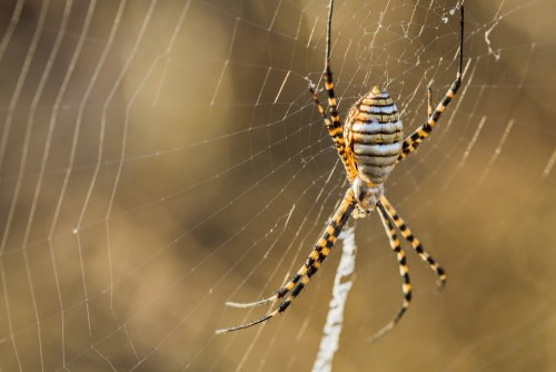 "alt="" a banded garden spider outdoors on a stick"""