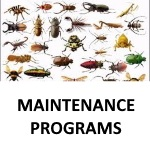 "alt=""a group of different insects that CJJB provides pest control services for"""